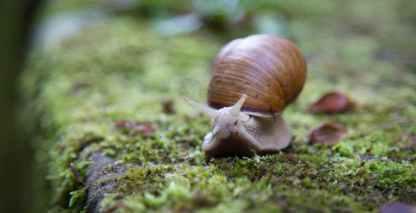 slow slug snail shell